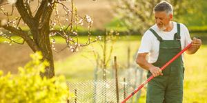 Jardinage pour les nuls : aménagement de jardin