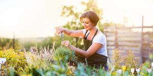 Jardinage pour les nuls : élaguer, scarifier et tondre