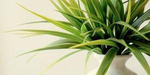 Soigner vos plantes d'intérieur