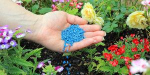 Bestrijding van plantenziektes en schadelijke insecten in de tuin