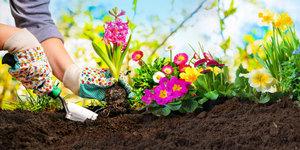 Planten en potten voor het terras en de tuin