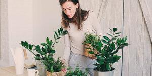 Les plantes d'intérieur les plus tendance
