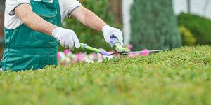 Maak je tuin zomerklaar met grasmaaier, grastrimmer en heggenschaar