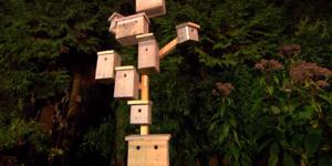 Vogelhotel maken