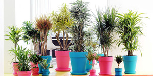 Stralende luchtzuiverende kamerplanten in huis of op kantoor